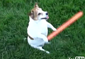 Jedi Doggie