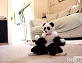 Dancing Panda