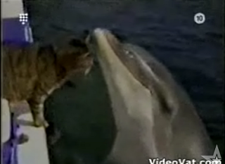 Cat Meets Dolphin