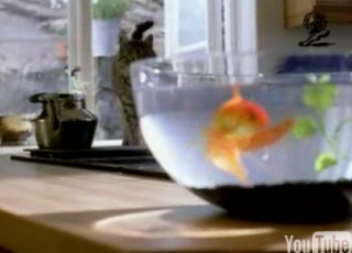 Cat Vs. Goldfish