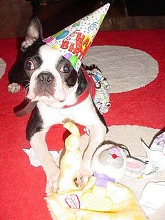 Do Tell: Have You Thrown a Pet a Party?