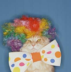 16 CAT CLOWN