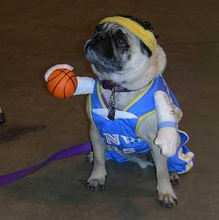 19 DOG BASKETBALL PLAYER