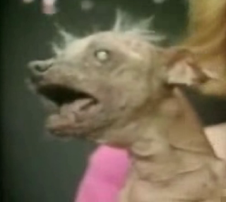 """The World's Ugliest Dog"" Caught On Tape!"