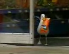 Shoplifting Seagull Has The Munchies