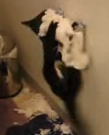 Kitty Vs. Toilet Paper