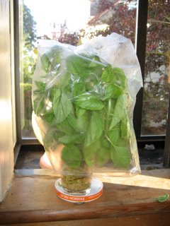 Yummy Link: Keep Basil Fresh Longer
