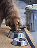 What's in Your Pet's Food Dish?