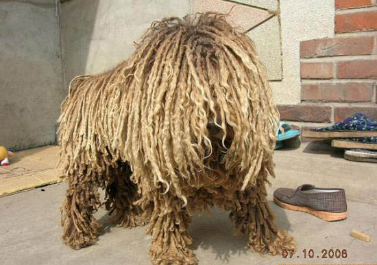 This dog reminds me that I need to mop my floor