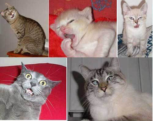 Name That Cat Emotion!