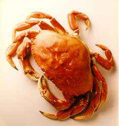 What's In Season: Dungeness Crabs
